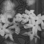 composite with jasmine flowers over a wooden door