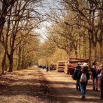 Hikers walk down a path in a wood